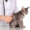 Ветеринарные клиники в Каргополе